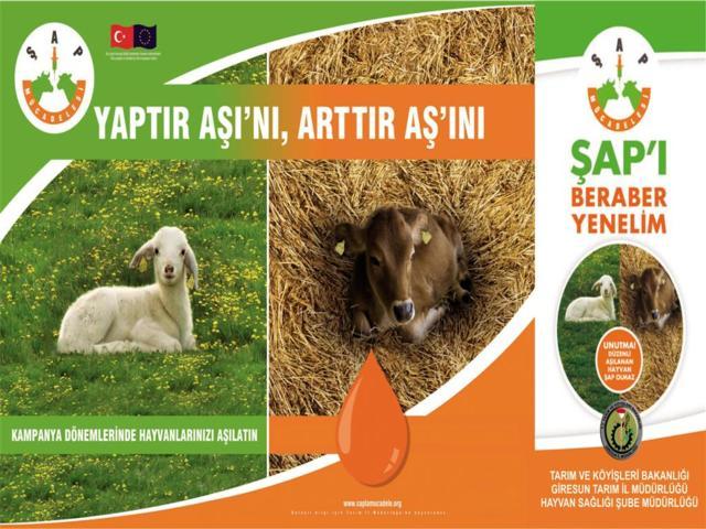 Süt Sığırcılığı Aşılama Programı Bilgileri