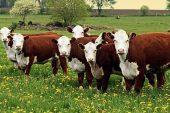 Hayvan Hastalıklarıyla Mücadele Desteklemeleri