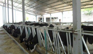 Türkiye 2012 Hayvancılık Fuarları