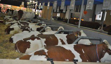 2012 Hayvancılık Fuarları Takvimi