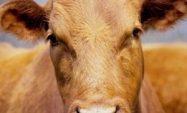 Hayvan Hastalığı Tazminatı Desteklemeleri