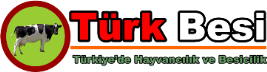 Türk Besi
