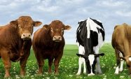 2017 Yılı Hayvancılık Desteklemeleri