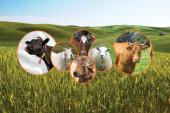 2013 Tarım Ve Hayvancılık Fuarları