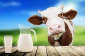 Sütün Bir Faydası Daha Ortaya Çıkarıldı