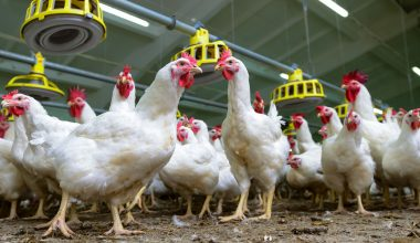 2012 Haziran Ayı Kümes Hayvancılığı Üretim İstatistikleri