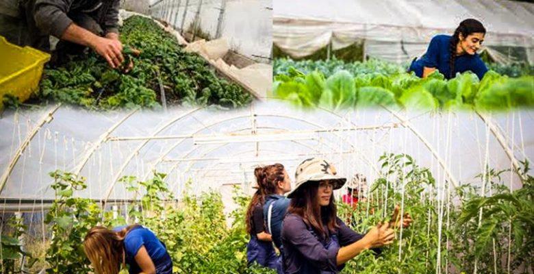 Genç Çiftçiler İçin Hibe Desteği