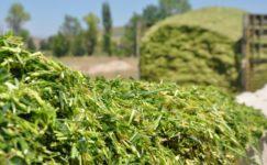 Silajlık Bitkiler ve Silolanabilirlik Kriterleri