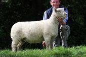 Soutdown Koyunu Yetiştiriciliği Ve Irk Özellikleri